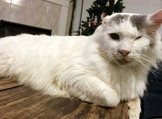 From Rags to Riches: Lemond's Journey to Adoption http://www.wideopenpets.com/from-rags-to-riches-lemonds-journey-to-adoption/