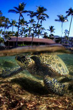 Sea Turtle ========================= Bonjour, pour les bijoux Gaby Féerie => http://www.alittlemarket.com/boutique/gaby_feerie-132444.html