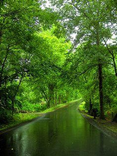 ɛïɜ Nature Calls ~ image by La Tur ɛïɜ Beautiful Roads, Beautiful Landscapes, Beautiful World, Beautiful Places, Image Nature, Nature Scenes, Shades Of Green, Mother Nature, Countryside