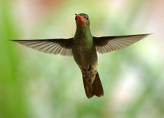 What Does The New Google 'Hummingbird' Update Mean For Your Website?