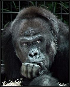 The Thinker by Wilhelm T. on 500px