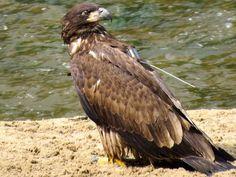 Decorah Eagles 2014