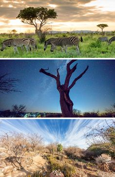 Nothing like a real African getaway to forget about your every-day routine! Game Lodge, Game Reserve, Zebras, Stargazing, Lodges, South Africa, Safari, Golf Courses, Routine