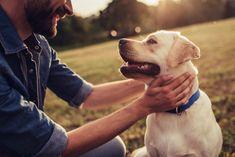 Wir haben Anfängerhunderassen für euch im Überblick und wann ein Hund für Anfänger geeignet ist. Beginnerhunde sozusagen. Die 4 beliebtesten Hunde für Anfänger und leicht erziehbaren Hunde im dogbible Hundeblog Labrador Retrievers, Puppy Training Classes, Dog Training, Training Tips, Cavalier King Charles Spaniel, Ticks On Dogs, Dog Separation Anxiety, Flat Coated Retriever, Dog Years