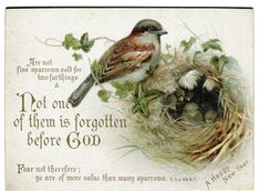 Victorian Religious Card New Year Greetings Scripture Quotes Sparrow Chicks | eBay