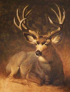 Winter Grey Buck by Ezra Tucker kK Wildlife Paintings, Wildlife Art, Animal Paintings, Animal Drawings, Art Drawings, Deer Photos, Deer Pictures, Animal Pictures, Art Pictures
