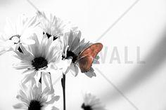Julia Butterfly - b/w Red - Fotobehang & Behang - Photowall