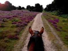There are only a few things more beautiful than the view in between a horse's ears and even fewer things lovelier then horse ears and horses noses. The Road Not Taken, Horse Ears, Happy Trails, Trail Riding, Dressage, Nice View, Savannah Chat, Country Roads, Tumblr