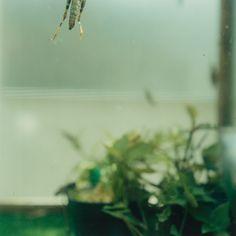 <p></p><p>Untitled from the series Tentacles of Glance © Mikiko Hara, courtesy MIYAKO YOSH</p><p></p>