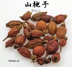 zhi zi - gardenia fruit: http://kampo.ca/herbs-formulas/herbs/sanshishi/