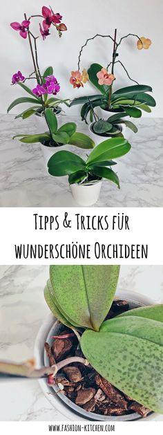 Tipps & Tricks für wunderschöne und gesunde Orchideen. Die wichtigsten Tipps, um Orchideen zu pflegen. grüner daumen, pflanzen, orchideen tipps und tricks, orchideen pflege, was bei orchideen beachten, orchideen gießen, Phalaenopsis, Orchideenblüte, fashion kitchen