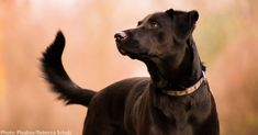 Black Dog Syndrome, Black Dog Day, Report Animal Abuse, Smartest Dogs, Cute Animal Photos, Interesting News, Animals Of The World, Shelter Dogs, Dog Photos