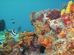 Cozumel, Mexico - Palancar Reef one of the most amazing dive experiences, ever.