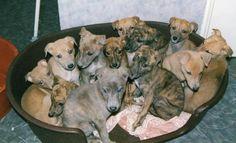 Basket of grey-babies