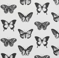 different black and white butterfly aesthetic