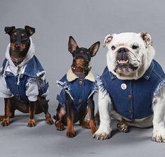 554c6f5fcbc1 Denim Dog Jacket   Denim Dog Vest   Patched Dog Vest   Dog Denim   Dog Vest    Denim Vest for Large Dog   Heavy Metal Dog   Cool Dog Jacket