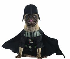 Ewok Dog Costume : Amazon.com: Rubies Costume Star Wars Collection Pet Costume, Medium, Ewok