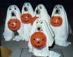 Halloween jeje