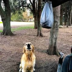 Dozer the golden retriever dog trying to get food tied to car left for homeless man at dog park Slow Cooked Roast Beef, Slow Cooker Roast, Beef Chuck Roast, Best Cut Of Beef, Best Pot Roast, Slow Cooker Lasagna, Recipetin Eats, How To Dry Rosemary, Pot Roast Recipes