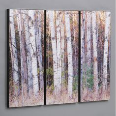 Wilson Studios Birch Trees in the Fall 3 Piece Framed Photographic Print Set