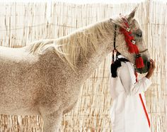 Girl with horse   |   Abu Dhabi Tourism Authority   |   Abu Dhabi, UAE frédériclagrange.com