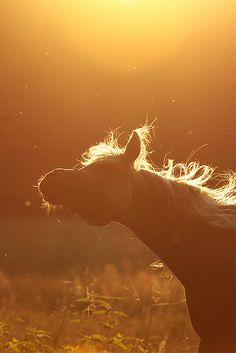 The light in this picture is so amazing. I love how you can see the movement of the horse as well... beautiful!