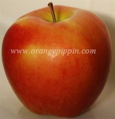 Ambrosia photo.  A site that identifies 100s of varieties of apple and outlines their tasting notes.