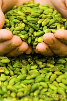 Detail of chef Corrodo Assenzas hands cupping a pile of Bronte pistachios / Unique to the region of Bronte in Sicily and harvested only every other year, the iridescent green Bronte pistachios are a much sought after delicacy.
