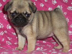 i miss my puppy ):