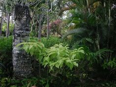carving Balinese Garden, Garden Styles, My Dream, Home And Garden, Carving, Plants, Wood Carving, Sculpture, Flora