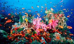 "What a lively coral reef looks like!  New article  I wrote called ""Our World's 'Dead Zones' & Why They Are There!"