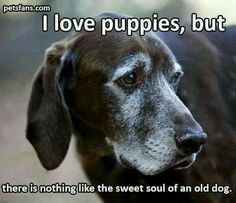 Senior Dogs are WONDERFUL TOO! They're already trained and want to be loved! Old dogs always make me want to cry! Cute Puppies, Cute Dogs, Dogs And Puppies, Doggies, Dogs Pitbull, Corgi Puppies, Chihuahua, Animals And Pets, Funny Animals