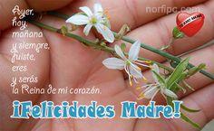 ¡Felicidades Madre! Ayer, hoy, mañana y siempre, fuiste, eres y serás la Reina de mi corazón. #DiaDeLaMadre