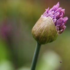 Gardening and Flower Arrangements