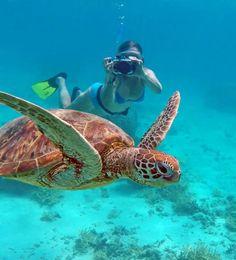 ウミガメと泳ぐ!ニューカレドニア旅行の観光アイデアまとめ。