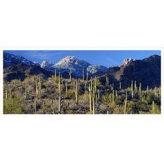 Saguaros, Superstition Mountains