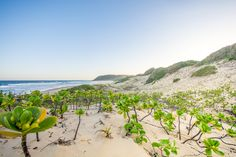 Ponta is overrun by South Africans over December - here's how to beat the crowds with our complete guide to Ponta Malongane. Mozambique Beaches, African Countries, Travel Destinations, Camping, Country, Outdoor, Magazine, Africa, Road Trip Destinations