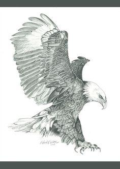 Eagle Tattoo Forearm, Bald Eagle Tattoos, Phoenix Tattoo Design, Skull Tattoo Design, Tattoo Designs, Bird Drawings, Animal Drawings, Eagle Drawing Easy, Aquarell Phönix Tattoo