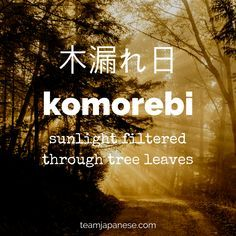 12 Beautiful and Untranslatable Japanese Words Komorebi: the Japanese word for sunlight filtered through trees. For more beautiful and untranslatable Japanese words, visit The Words, Weird Words, Cool Words, Japanese Quotes, Japanese Phrases, Beautiful Japanese Words, Beautiful Words, Unusual Words, Unique Words