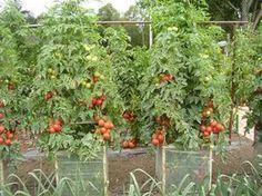 Pomôžu vám k tomu lacné klimatizačné bunky Edible Garden, Garden Plants, Flora, Outdoor Structures, Gardening, Garden Ideas, Apollo, Health, Gardening At Home