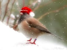 ☆ Merry Christmas everyone! ☆ Have a safe and happy holiday! May we keep in mind the true meaning of Christmas now and throughout the New Year. Christmas Bird, Christmas Animals, Country Christmas, Christmas Humor, Winter Christmas, Vintage Christmas, Merry Christmas, Christmas Ideas, Christmas Pictures