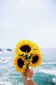 Sunflowers and sea