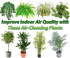 http://preventdisease.com/images16/iaq_plants.jpg