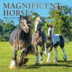 HORSE /& WESTERN SCHOOL GIFTS ACCESSORIES CUTE PLUSH PUPPY PENCIL CASE