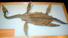 "New Plesiosaur Genus named in honour of Dr Elizabeth ""Betsy"" Nicholls"