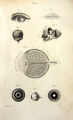 Grabado sobre la anatomía del ojo de 1846