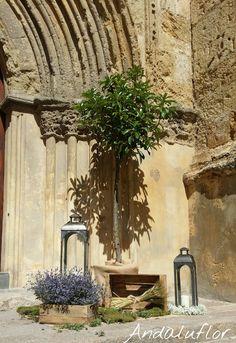 Más cositas que hemos hecho para #decoración de #bodas en #iglesias: con paniculata, faroles, arbolitos y otros elementos decorativos.