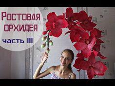 (3) Большие цветы   Ростовые орхидеи. Часть 3 - YouTube