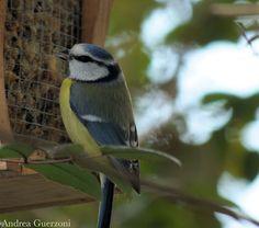 Un Kookaburra In Giardino - Un po' di niente, un po' di tutto: Con un po' di fortuna ...#comment-form#comment-form