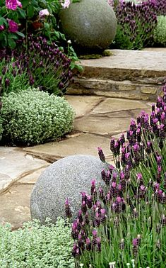 Lavender garden path